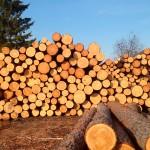 сваленный лес