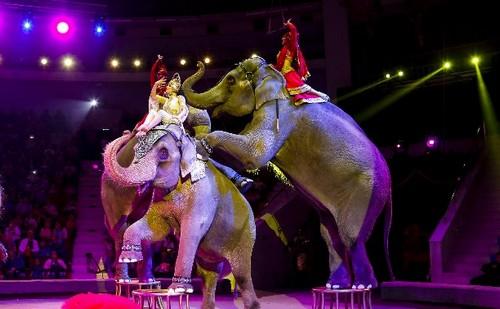 охрана труда в цирке